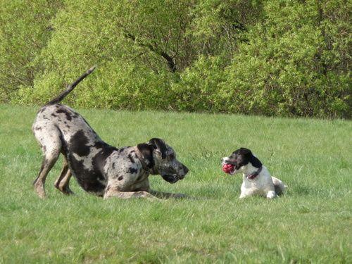 Hund Spiele Kostenlos