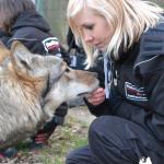Wolfsbesuch  (3)