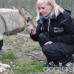Wolfsbesuch  (4)