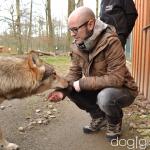 Wolfsbesuch  (6)