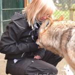 Wolfsbesuch  (7)